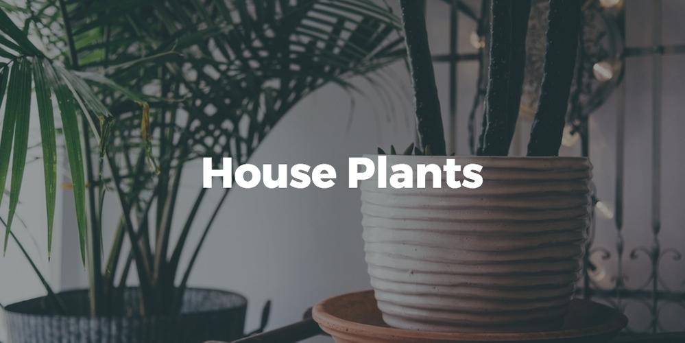 Does your house have plants?