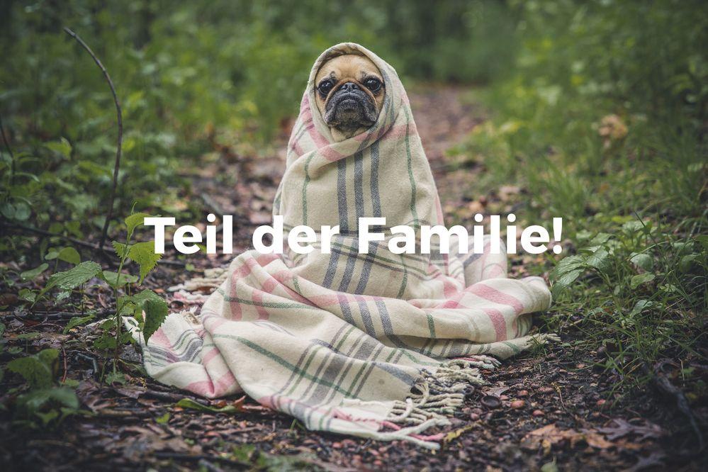 Stelle dein Haustier vor!