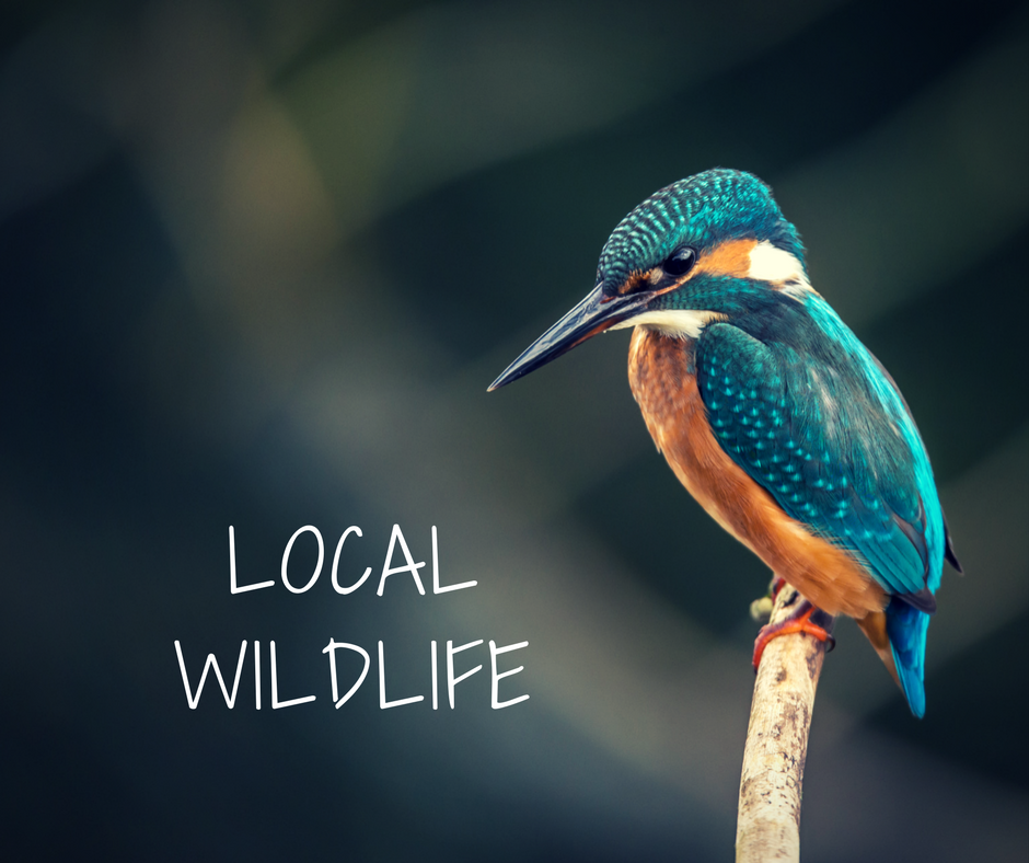 What's your local wildlife?