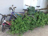 bikes in weeds.JPG