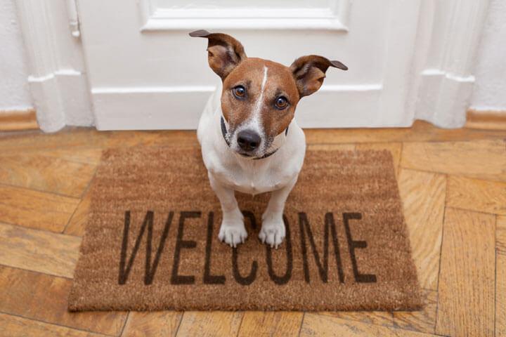 ds-welcome-hund.jpg