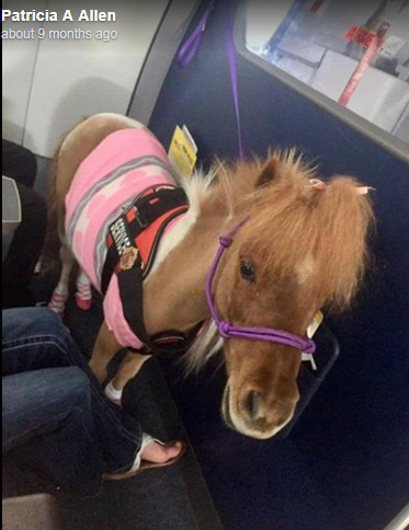 Pony in the plane