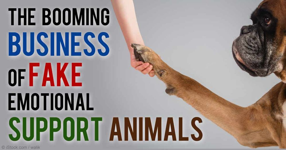 business-fake-support-animals-fb