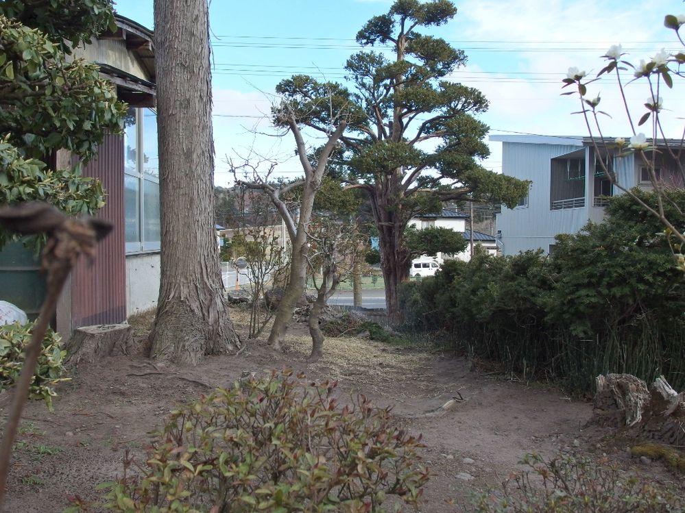 ゴールデンウィークを前に庭の手入れを本格化