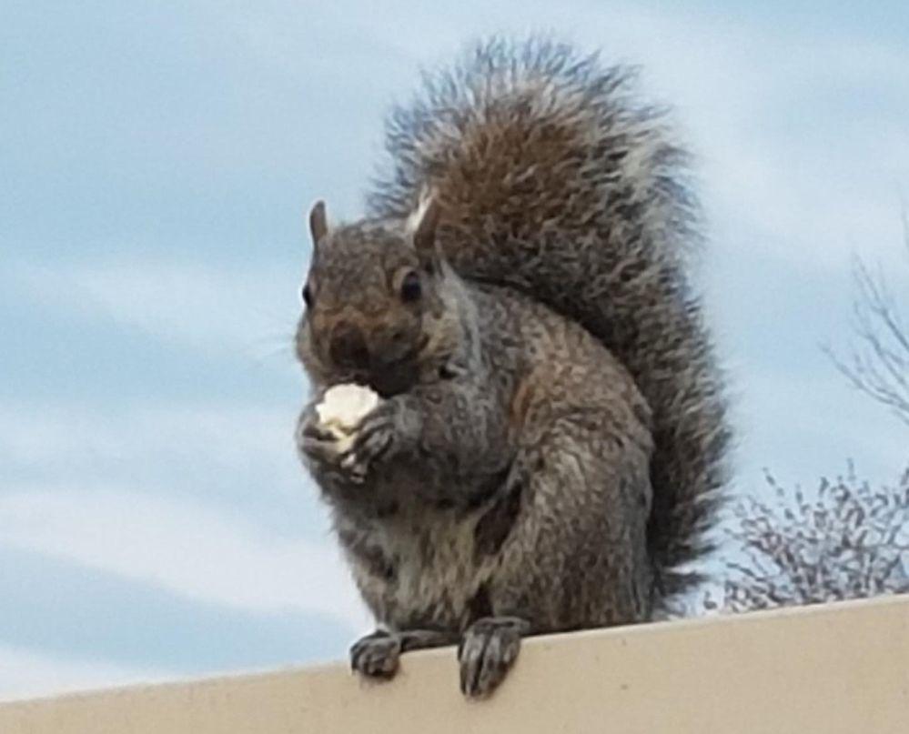 Squirrel with popcorn 1.jpg