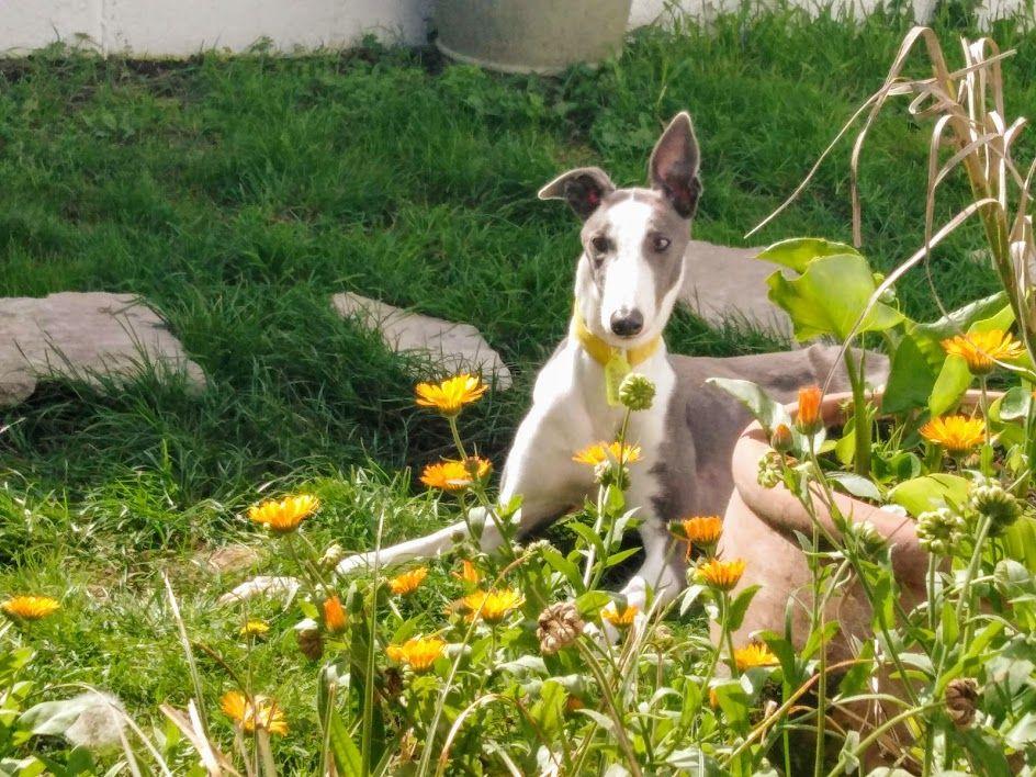Greyhouns. Anyone else?