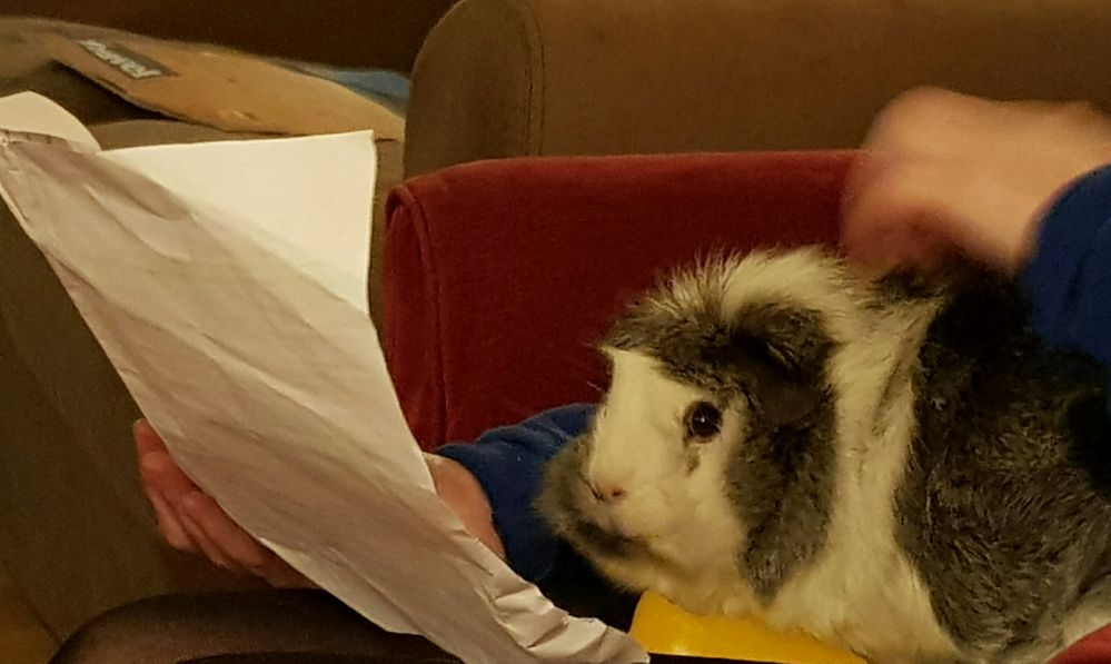 Stormy helping with homework