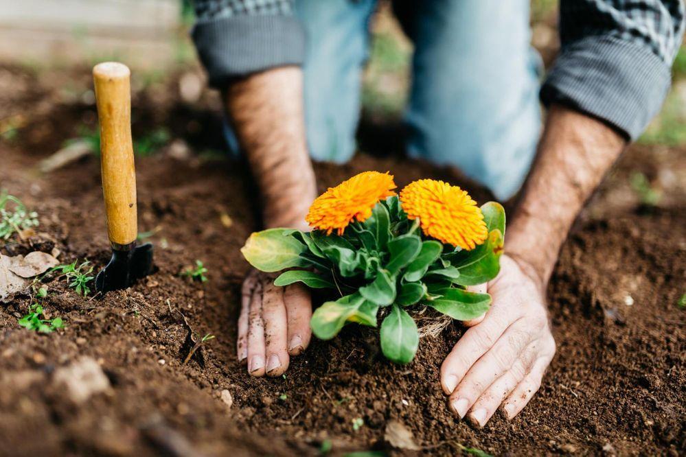 Wie kümmert ihr euch im Frühling um eure Pflanzen?