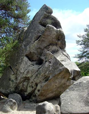 Photo «Le diplodocus» crédit Bleau.info