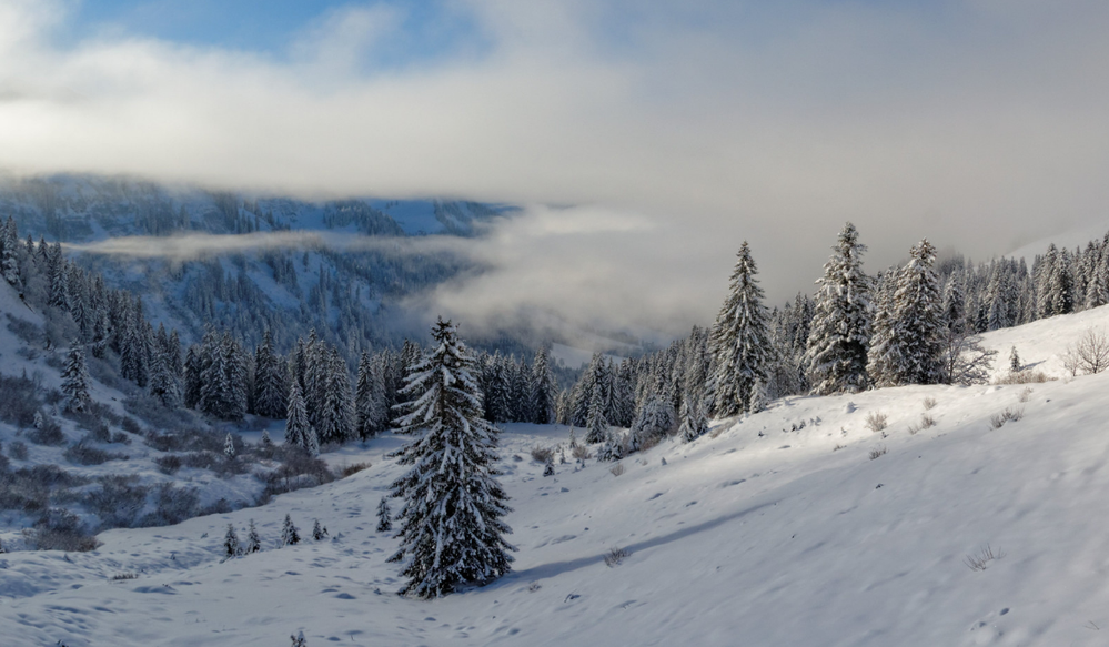 Winterimpression_7.png