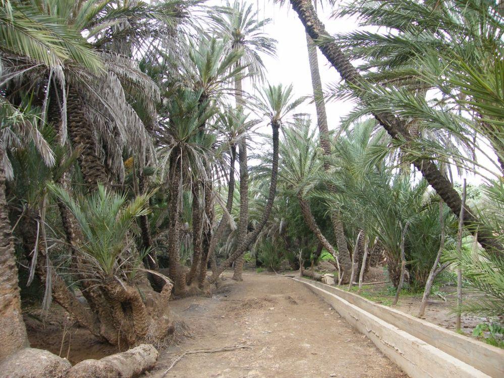 Explorez les environs d'Essaouira (Maroc)