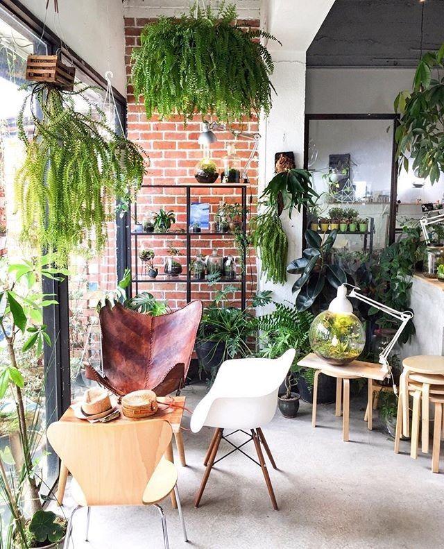 Pflanzen in eurer Unterkunft