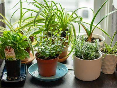 herb-garden-2-intext5.jpg