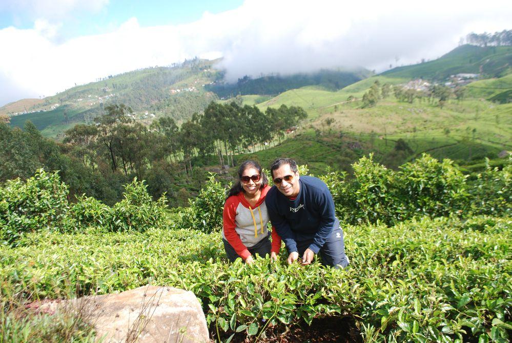 Tea Estate - Dambatenne