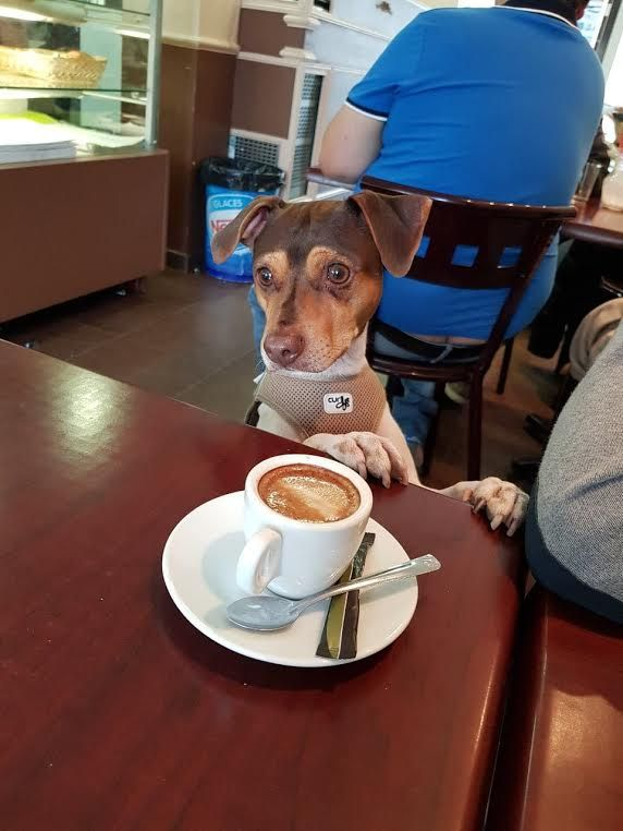 """gaby """"the human behind me was so embarrassing, zoom """"it's""""......."""