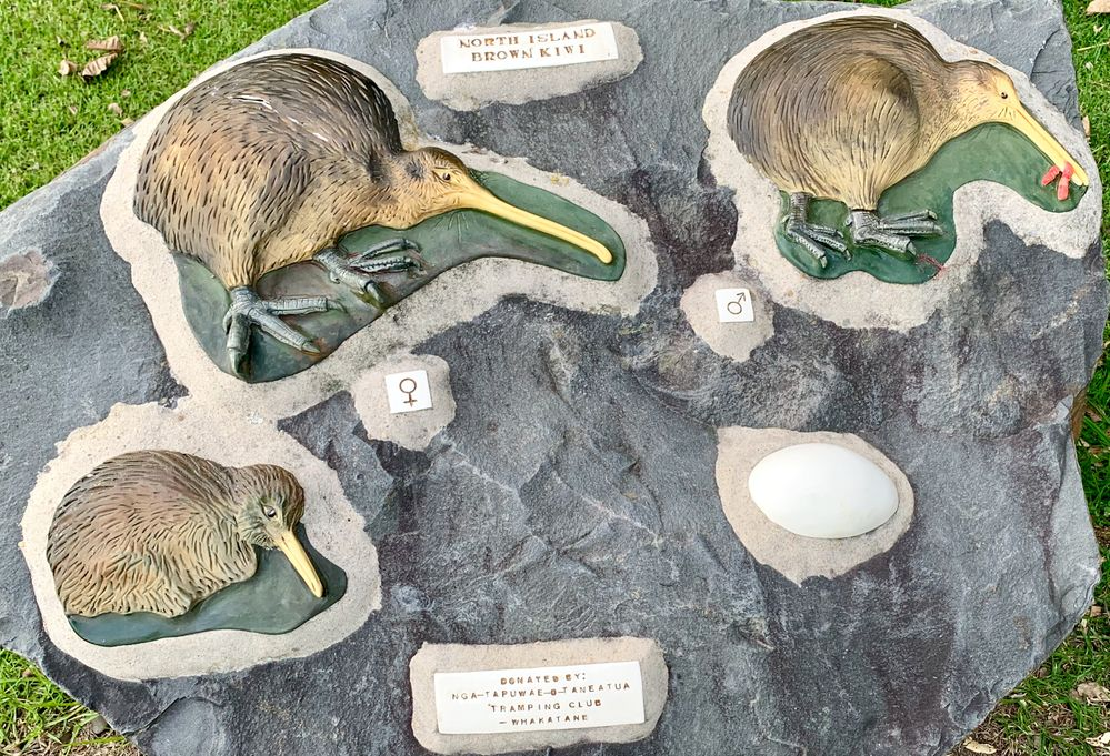 The northern kiwi found in this reserve