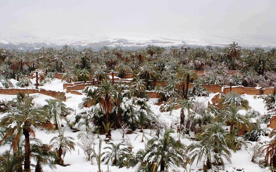 Palmeraie sous la neige au Maroc