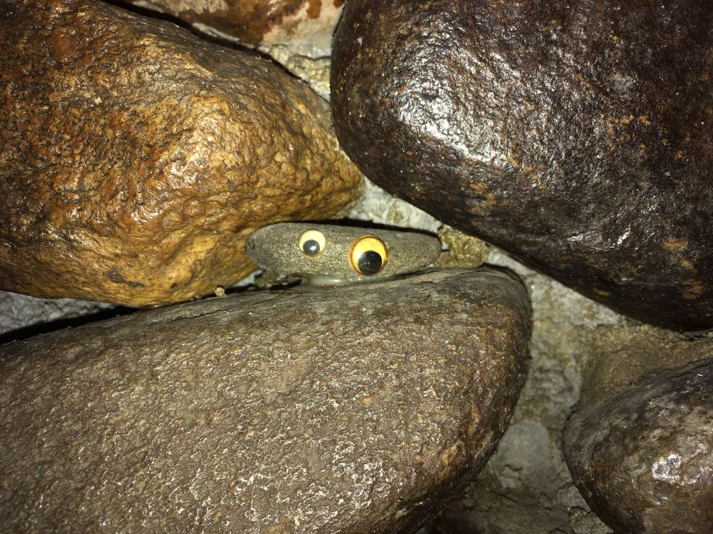 Googly-Eyes.JPG