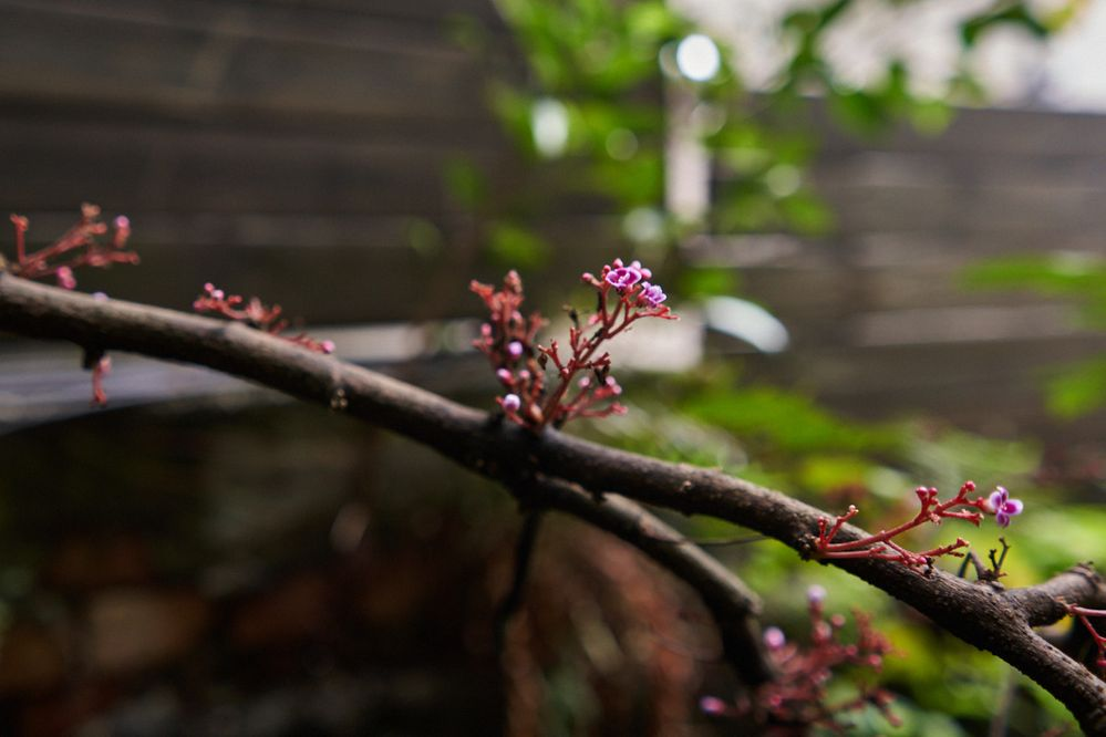 Der Frühling ist da!