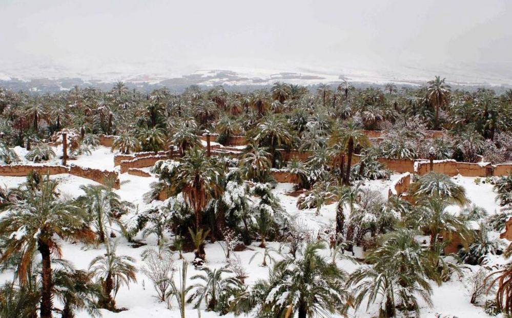 Palm grove under the snow in Morocco