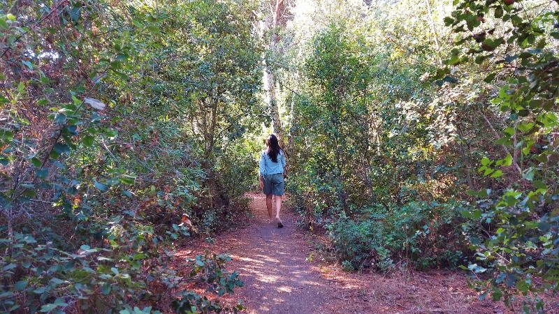 Forest bathing, first thing in the morning
