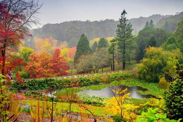 Mt Lofty Botanic Gardens in Autumn