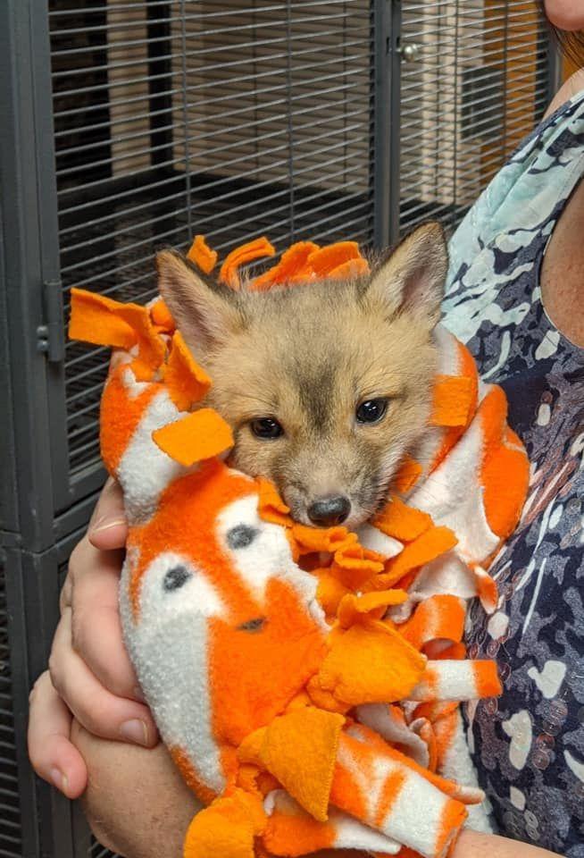 fox 2.jpeg
