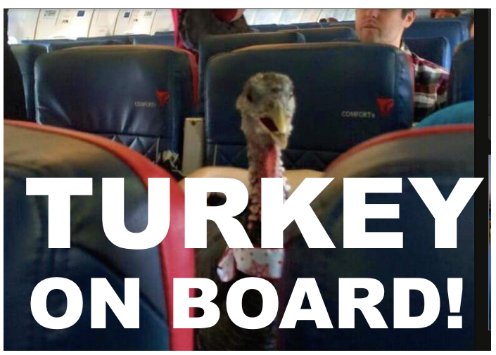 1turky.png